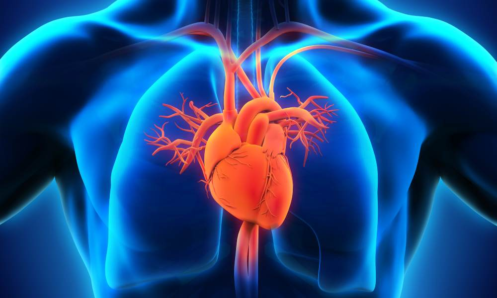 pic%20-%20heart%2C%20lung%2C%20gastric